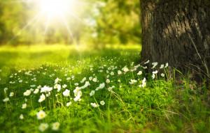 Eté, Forêt, Fleurs, Arbre